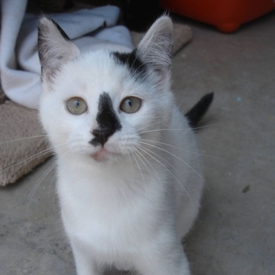 Female Cat and Kittens for Adoption