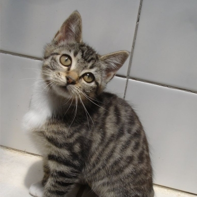 Female Cats and Kittens for Adoption